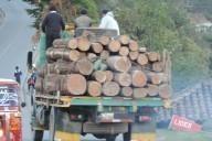 Tala de arboles en la región Ixil producto del paso de TRECSA por la región.