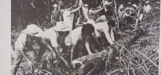 Colonizadores indígenas desmontan la selva del Ixcán, década 19701