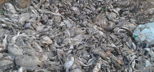 La Pasion Ecocidio 1jpg