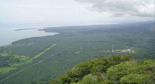 Una plantación de palma africana de los Maegli, en El Estor, Izabal. Fuente: Google Earth